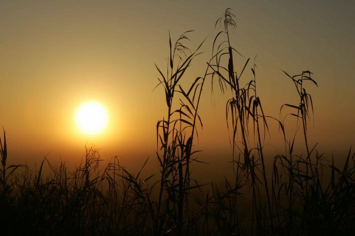 sunrise, swamp