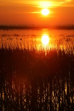 sunrise, swamp, water