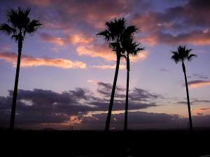 lever de soleil, de palmiers