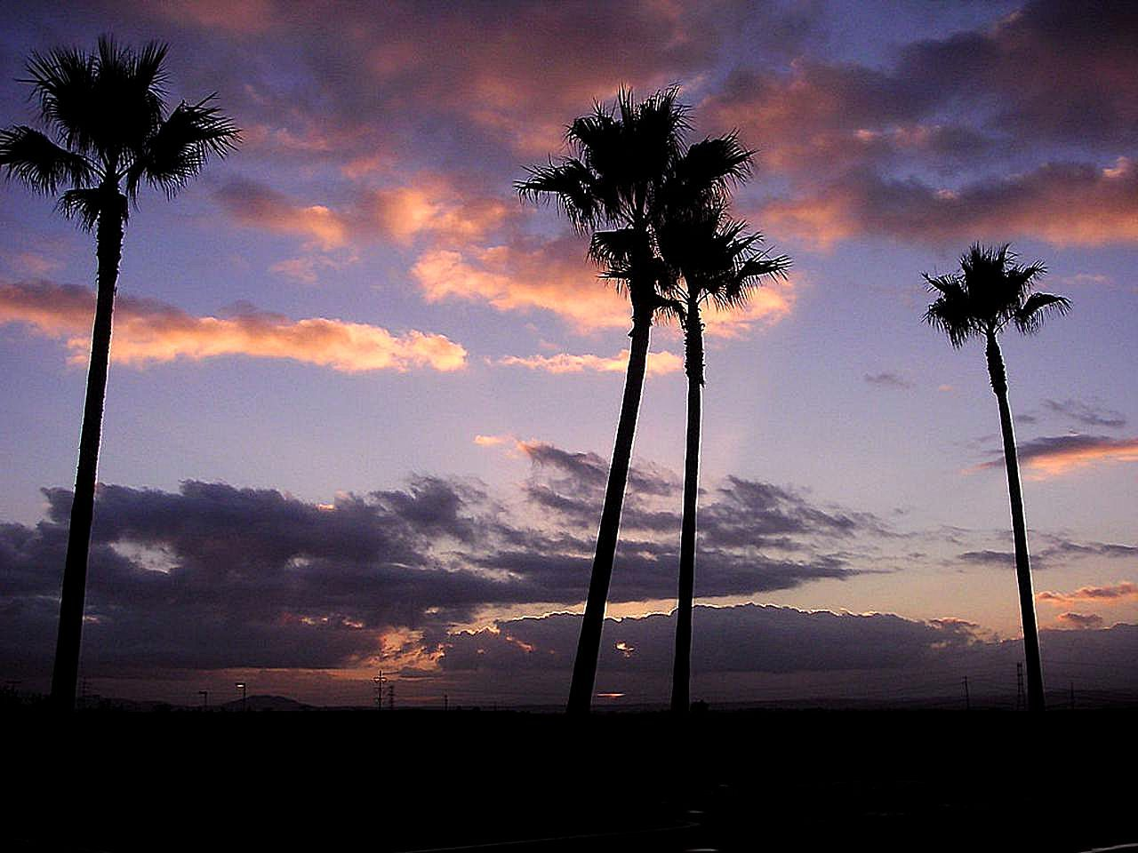 free picture sunrise palm trees