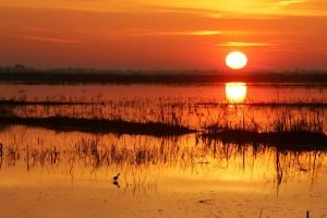 sunrise, red