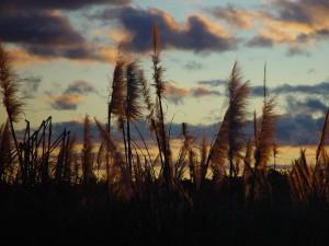 západ slnka, žiara, ikebany