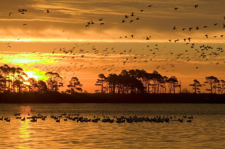 sunset, Chincoteague, wilderness, refuge