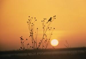 coucher du soleil, Tewaukoa, désert, refuge