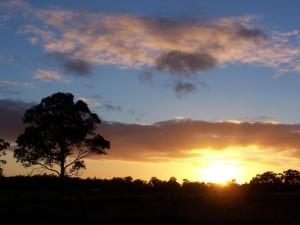 arbre, le lever du soleil
