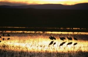 beau, coucher de soleil, oiseau, silhouttes,
