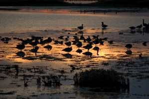 oiseaux, coucher de soleil, paysage