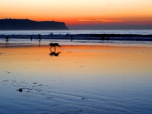 plages, le point, loma, couchers de soleil