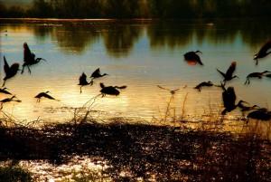 oiseaux, voler, coucher de soleil