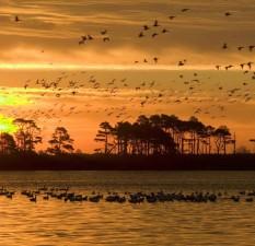 oiseaux, coucher de soleil, de l'eau