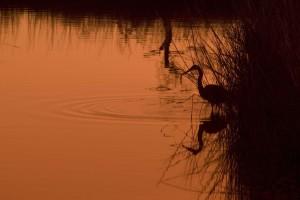calme, refuge, eaux, coucher de soleil