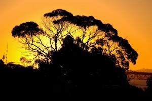 gomme, arbre, coucher de soleil