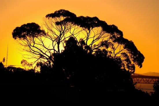 guma, strom, západ slnka