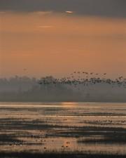 Lacassine, selvaggia, rifugio, Louisiana