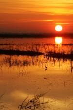 magnífico, puesta del sol, el agua