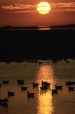 Ban đêm, thác, lake