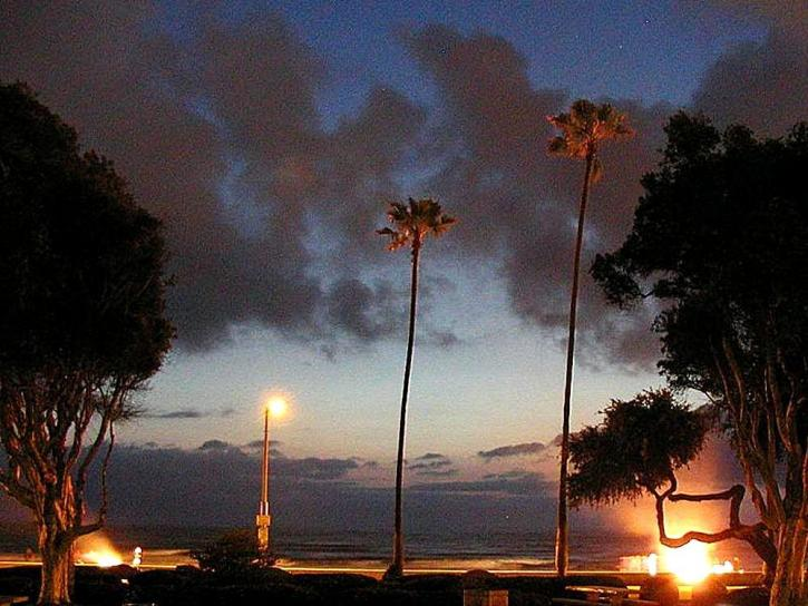 ocean, beach, sunset, palm trees