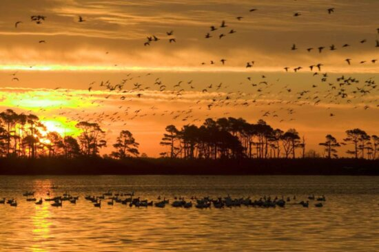 orange, clouds, bright yellow, setting, Sun, silhouetted, flying, waterfowl, trees