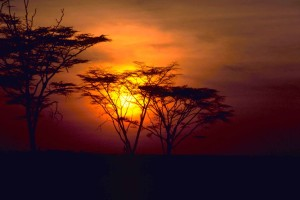 red, beautiful, African, sunset