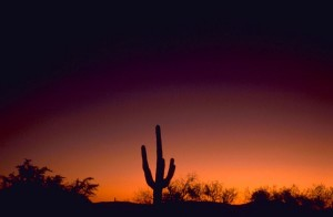 sabino, canyon, Arizona, sunset