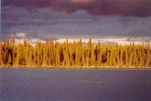 залез, отливки, златисто, светлина, бяла, смърч, гора, езеро
