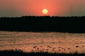 coucher du soleil, les zones humides, les oiseaux, l'eau