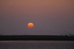 coucher du soleil, bas, nuages, des centaines, des oiseaux, silhouette, flocage
