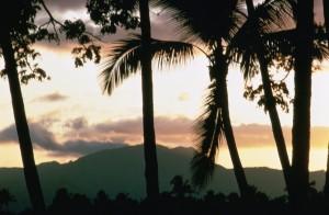 puesta del sol, palmeras