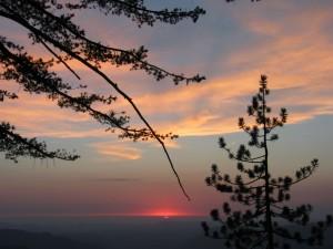 Sonnenuntergang, Kiefer, Bäume, Wolken