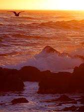sunsets, ocean