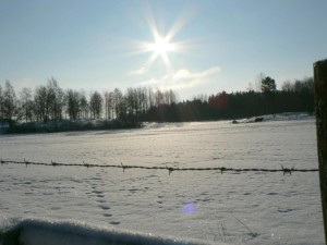 soleil, bétail, champ