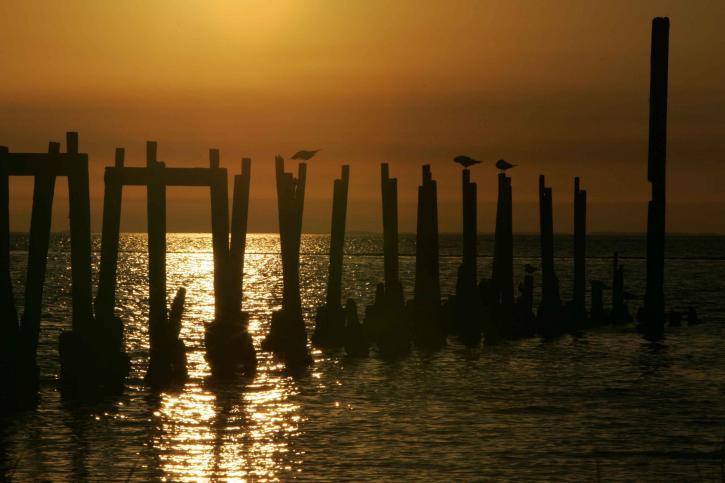setting, Sun, sparkles, ocean, birds, pilings, event