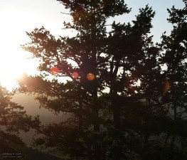 tree, sunset, treetop, branches