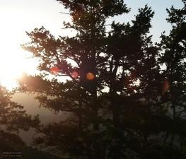 arbres, coucher de soleil, la cime des arbres, des branches