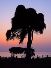 tree, sunset