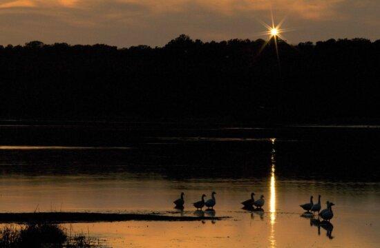 waterfowl, dusk, sunset