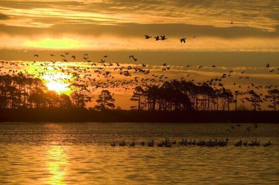 waterfowl, grace, sky, sunset