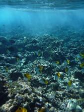 sous-marine, récif