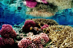 colorful, underwater, landscape, coral, reef