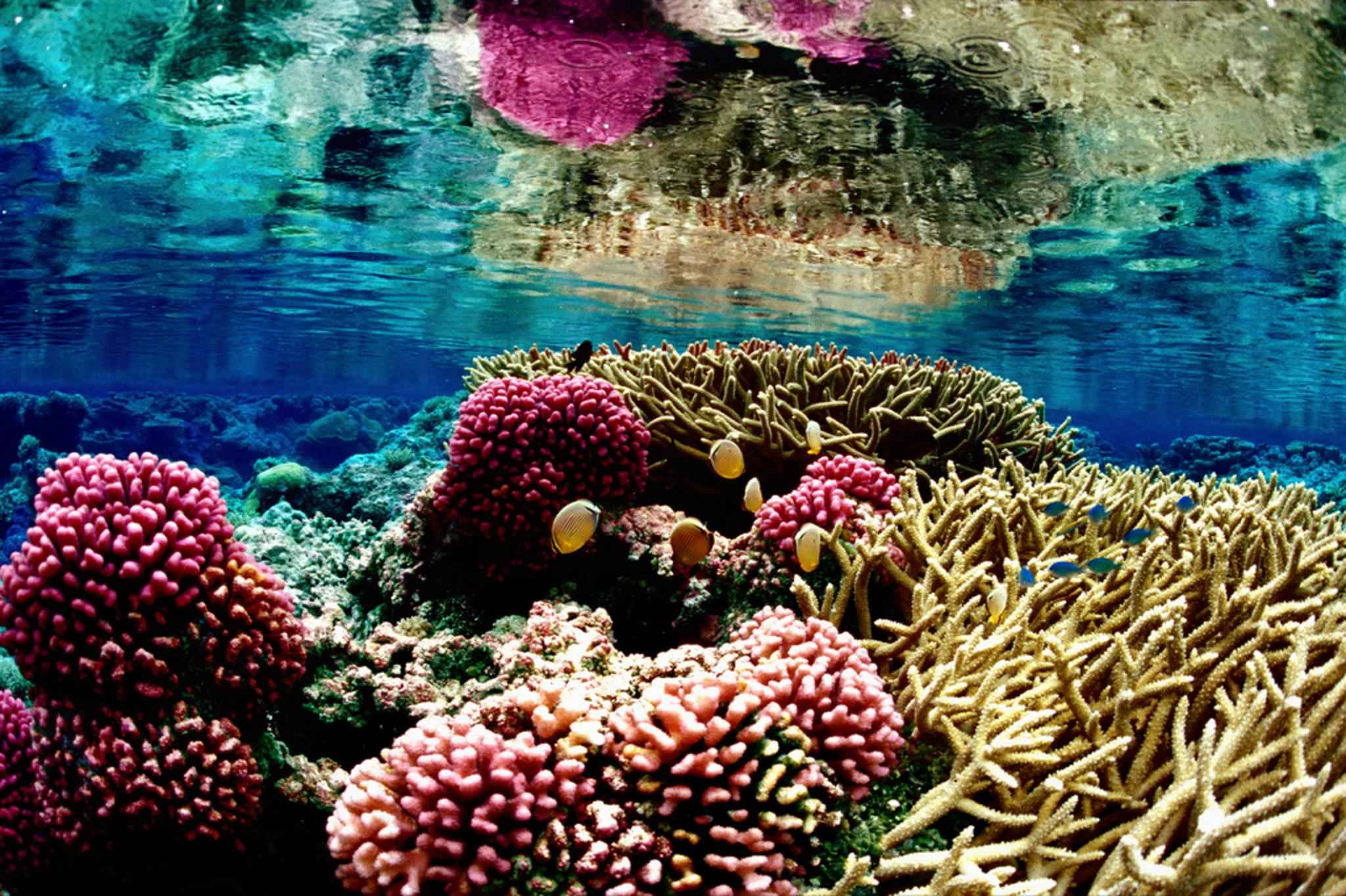nature coral underwater landscape - photo #31