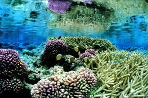 coral, gardens, underwater, landcape, scenic
