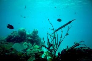 coral, reef, underwarer, photo