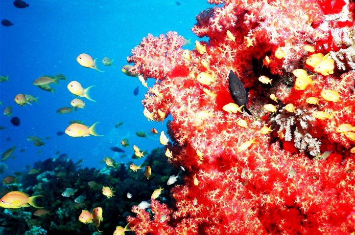 majeur, touriste, attraction, corail, récifs, plages, rouge, mer, méditerranéenne