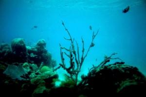moře, korály, útes