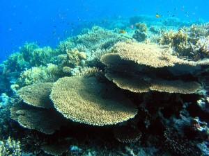 защита, Egypts, коралови рифове
