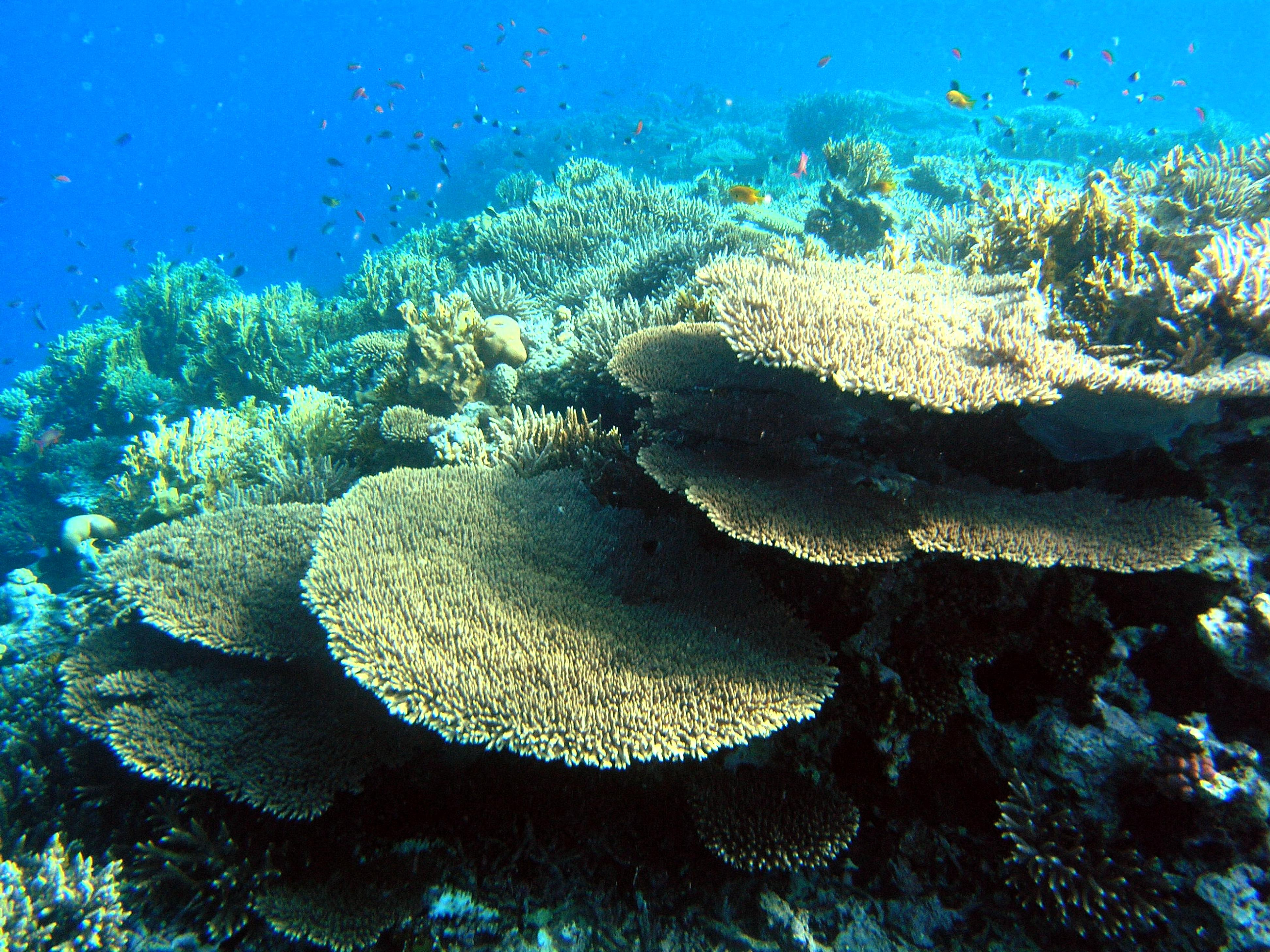 Free Picture Protecting Egypts Coral Reefs