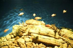 underwater, eden