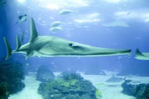 underwater, life