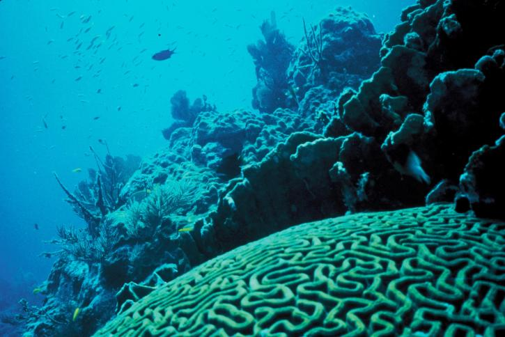 underwater, photo, coral, reef