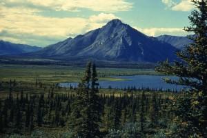 sheenjek, valley, Arctic, landscape, summer